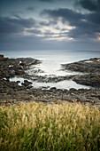 'Rock And Tall Grass Along The Coast; Curio Bay, South Island, New Zealand'