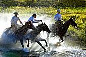 Cowboys Riding Horses Through Water