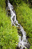 Waterfall Down A Lush Slope, Mount Hood National Forest, Oregon, United States Of America