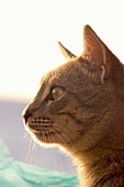 A Cat Watching