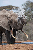 Elephant At A Watering Hole