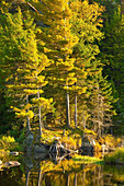 'Trees Reflected In The Late Afternoon Sun In Autumn; Orford, Quebec, Canada'