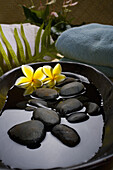 Spa Elements, Stones In Water In A Black Bowl With Plumeria Flowers, Towels And Plants In Background.