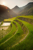 'Rice Terraces; Bangaan, Northern Luzon, Philippines'