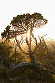 'The Shorepine Bog Trail In Pacific Rim National Park Near Tofino; British Columbia, Canada'