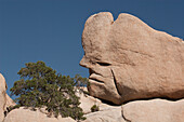 'Unique Face Formation In A Large Rock With Desert Shrub And Blue Sky; Palm Springs, California, United States of America'