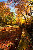 'A Path Covered With Fallen Leaves In Autumn; Durham, England'
