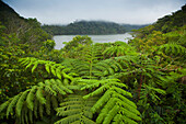 'Tropical Plants Grow Around The Twin Lakes At Twin Lakes National Park On The Island Of Negros; Negros Oriental, Philippines'