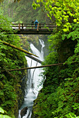 Waterfall Plunges Into A Canyon Below A Foot Bridge In An Old-Growth Rainforest, Sol Duc River, Olympic National Park, Washington, Usa