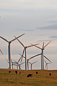 Windmills Used To Generate Electrical Power At Cowley Ridge In Southern Alberta, Canada