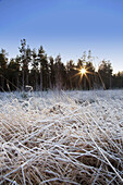 'Frozen Grass With Sunlight Shining Through The Trees; Northumberland, England'