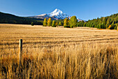 'Autumn Colours And Mount Hood In Hood River Valley; Oregon, United States of America'