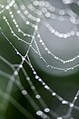 'Dew Drops On A Spider Web; Lake Of The Woods, Ontario, Canada'