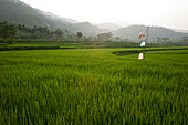 'Agricultural Fields; Indonesia'