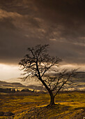 'A Leafless Tree With Dark Clouds Overhead; Northumberland, England'