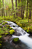 'Still Creek In Mount Hood National Forest In The Oregon Cascade Mountains; Oregon, United States of America'