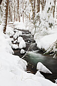 'Winter snow along still creek in mount hood national forest;Oregon united states of america'