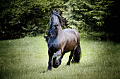 'A horse galloping in a field;Saanichton british columbia canada'