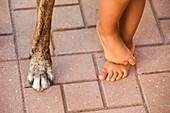 'A child's bare feet beside a dog's foot;Torremolinos malaga spain'