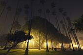 'A foggy night in palisades park;Santa monica california united states of america'