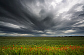 'Dark storm clouds over a field with red wildlfowers;Northumberland england'