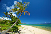 'Palm trees and a white sand beach along the coastline of an hawaiian island;Pilaa kauai hawaii united states of america'