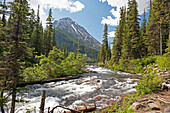 'A river running through a forest in the canadian rocky mountains;Alberta canada'