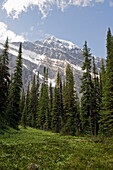 'A forest and the canadian rocky mountains;Alberta canada'