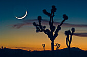 'Sunset In Joshua Tree National Park; California United States Of America'