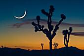 'Sunset In Joshua Tree National Park; California United States Of America'