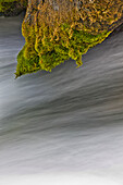 'Water flowing under a moss covered branch; black hills region south dakota united states of america'