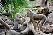 'A monkey grooming another monkey;Adelaide australia'