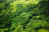 'Lush tree tops in a forest;Hawaii united states of america'