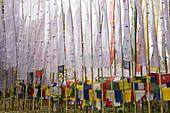 'Buddhist prayer flags at tashiding monastery;West sikkim india'