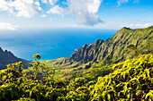 'View of kalalau valley from kokee lookout,Kokee, kauai, hawaii, united states of america'