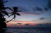 'Palm tree growing out over the sea after sunset;Paradise island, ranveli, south ari atoll, maldives'