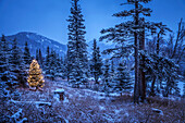'Lighted christmas tree in forest of snow covered trees in winter;Alaska, united states of america'