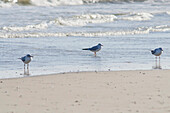 'Seagulls on the seashore;Porto san giorgio marche italy'