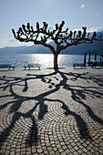 'Silhouette of a tree at the water's edge and it's shadow cast on the esplanade;Ascona ticino switzerland'