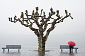 'A tree and a person with a red umbrella at the water's edge;Ascona ticino switzerland'