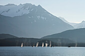 'A group of humpback whales fill their lungs with air before returning to feed along a forested shoreline in inside passage;Alaska united states of america'