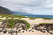 'Rocks and greenery in the sand leading to the shore;Honolulu oahu hawaii united states of america'