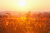 'Sunset at Shapwick Heath a wetland reserve of the Avalon Marshes of the Somerset Levels;Somerset England'