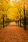 'Driveway covered in leaves in autumn;Canton shefford quebec canada'