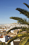 'View over the town with blue sky and palm fronds in the foreground;Antequera malaga province andalusia spain'