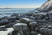 'Seaweed on rocks at the water's edge acadia national park;Maine united states of america'