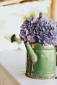 'Purple flowers in an old watering can;Pemberton british columbia canada'