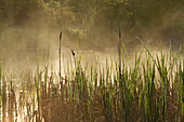 'Vegetation And Mist In A Marsh, Forillon National Park; Quebec, Canada'