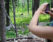 'A Young Woman Takes A Photo Of A Wild Black Bear (Ursus Americanus) Cub With Her Phone; Alberta, Canada'