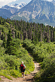 'Female hiker on a trail through the forest with a view of mountains in Haines Junction; Yukon, Canada'